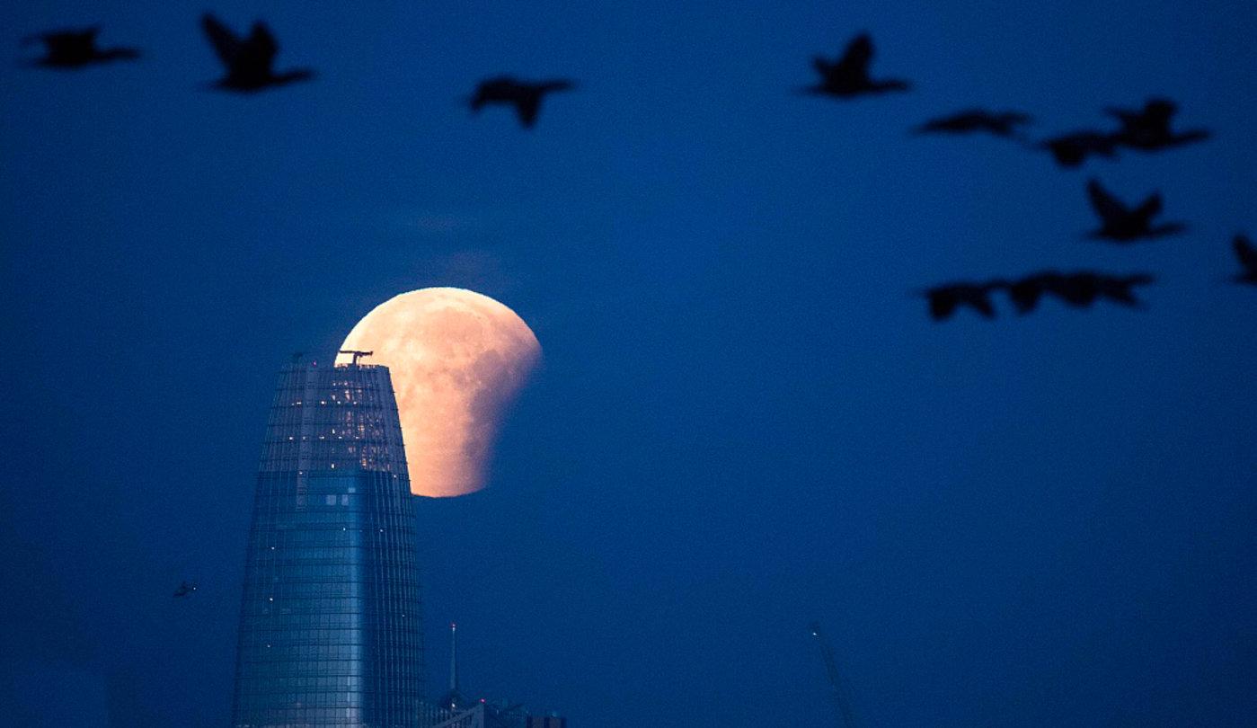 """""""超级蓝血月""""下的Salesforce Tower,图片来源于视觉中国"""