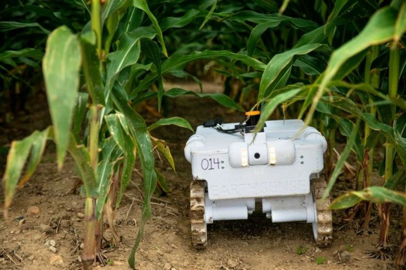 TerraSentia机器人正在接受培训,在农田间移动并对单个玉米植物进行远程诊断