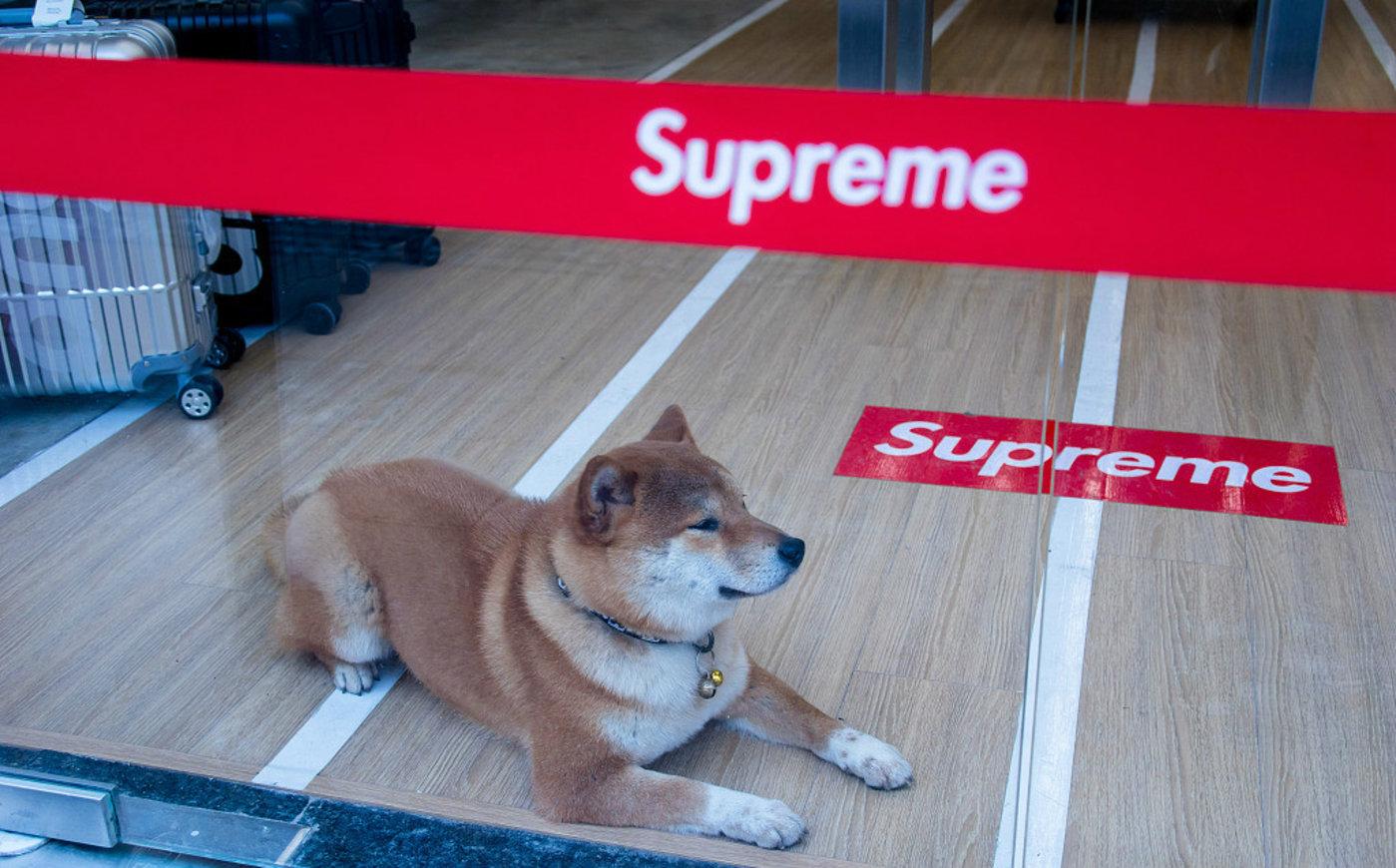 Supereme Italia 淮海路店的柴犬看门员,图片来源@视觉中国