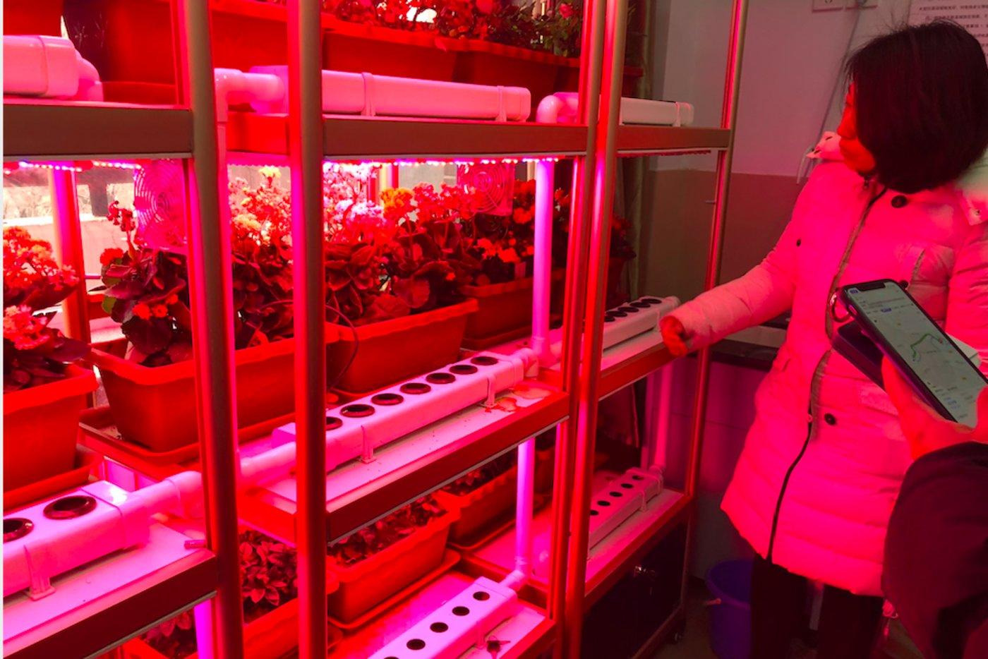 天津市岳阳道小学教师向钛媒体介绍物联网种植园,钛媒体李程程 摄