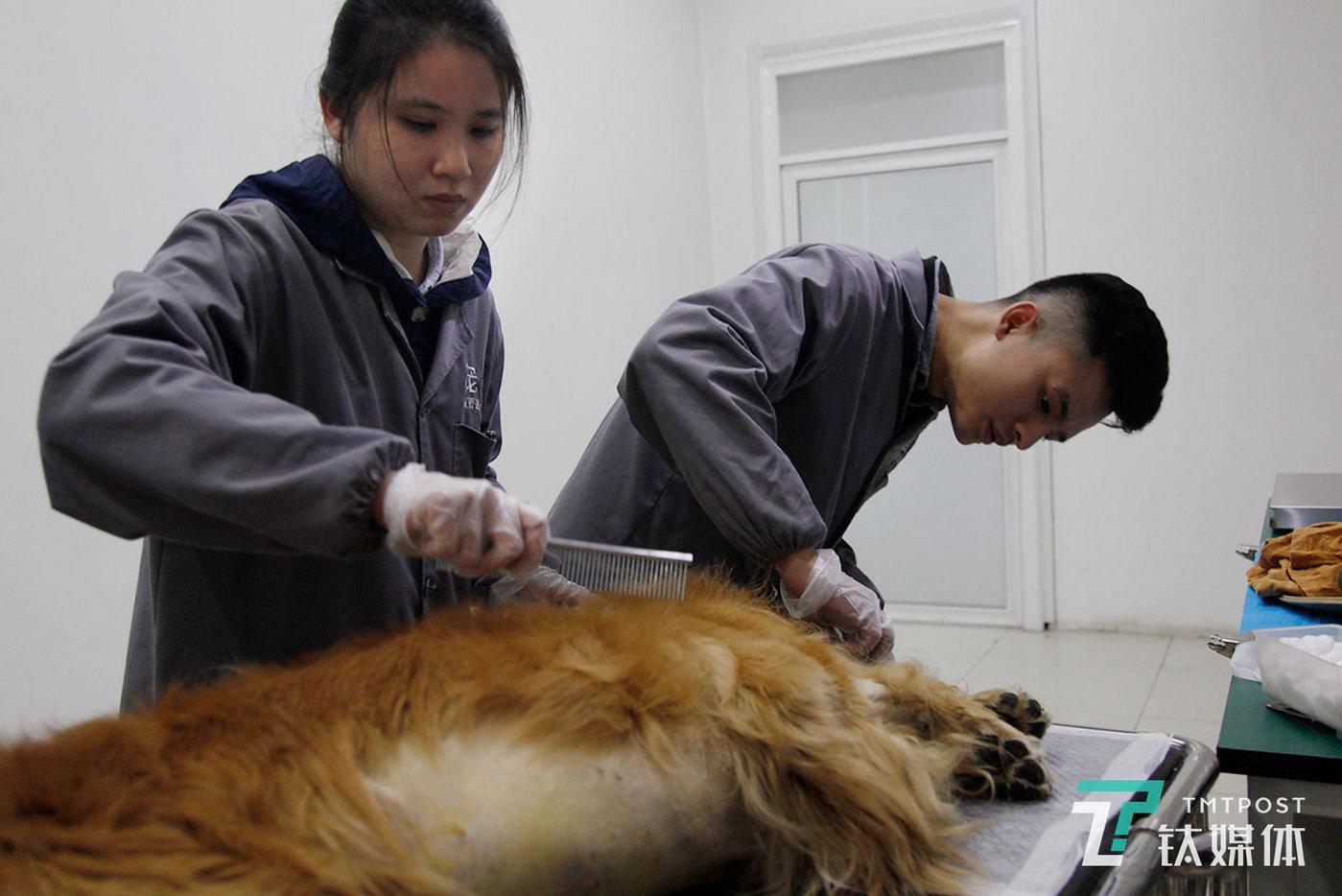 """莫莫和同事在清理一只死亡宠物犬的毛发。""""为宠物做殡葬是一段关系的善始善终。""""莫莫对钛媒体《在线》说,她理解生命的珍贵,就更觉得生命的平等,""""宠物只是不会说话而已,但其实它们什么都懂,它们值得被善待,它们应该干干净净地离开。"""""""