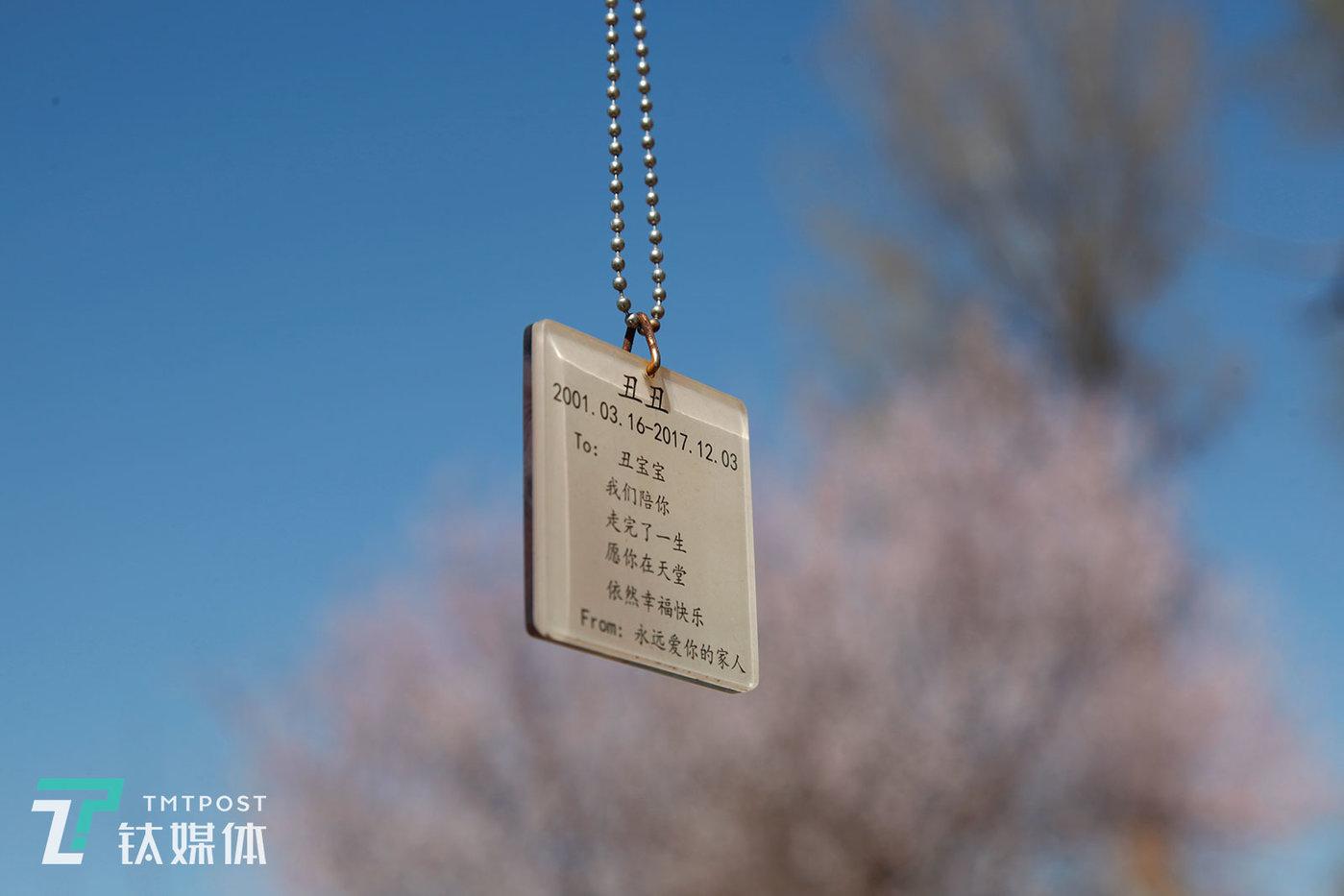 墓地里除了墓碑还有树葬,宠物的照片被制作成吊牌挂在树上,吊牌背面写着主人的留言。