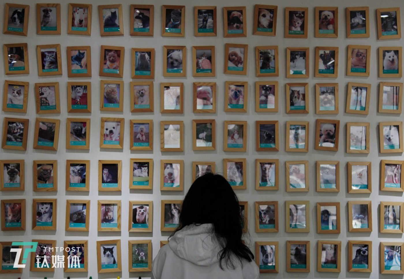 A customer stands in front of the 'Memorial Wall for Pets that have Passed Away' at Pet Admiration.