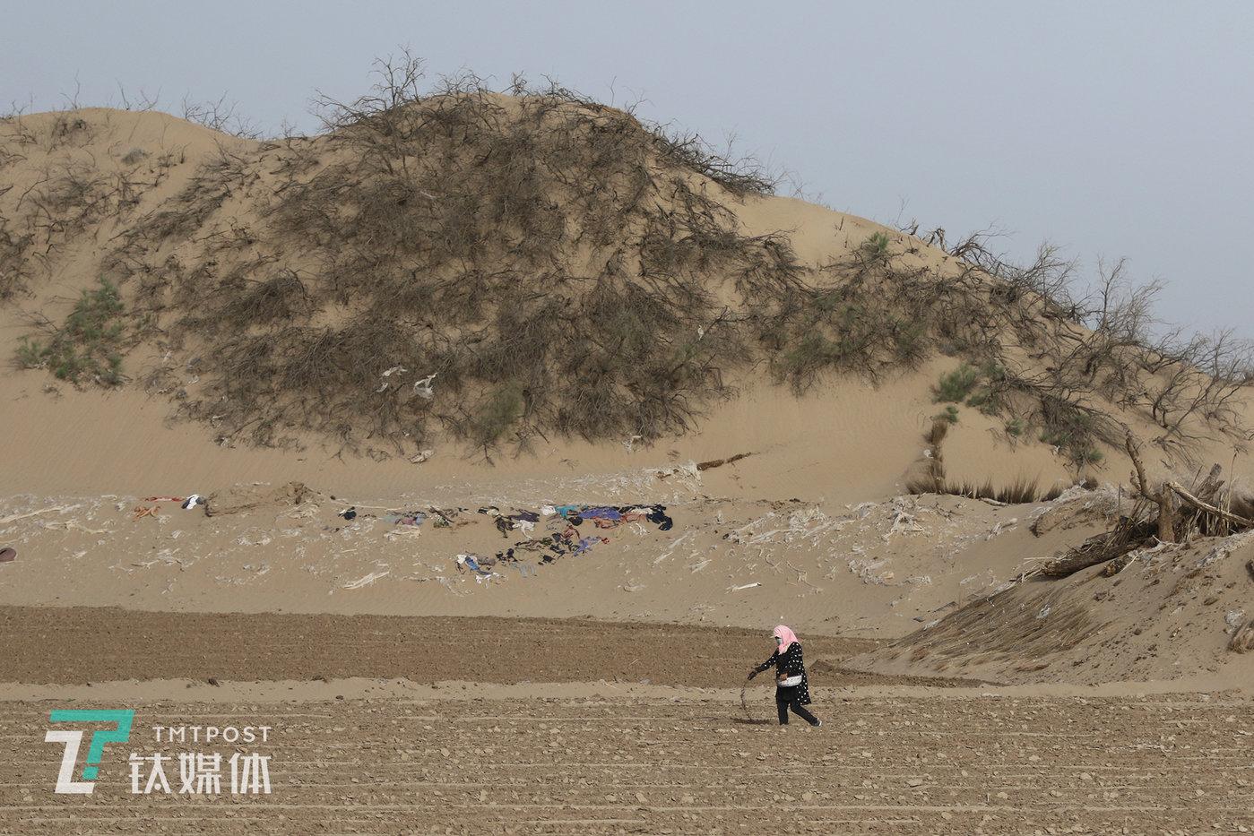 2019年5月18日,民勤县收成镇礼智村,沙漠边一片尚未播种的蜜瓜地,瓜农在撒化肥,瓜地边的沙坡铺满了用于固沙的薄膜和废旧衣服。