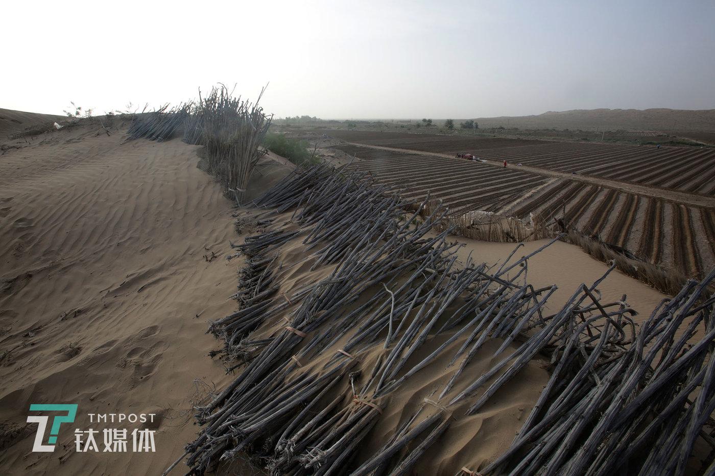 为了防沙固沙,瓜农还在沙丘上铺放了收割来的向日葵杆。