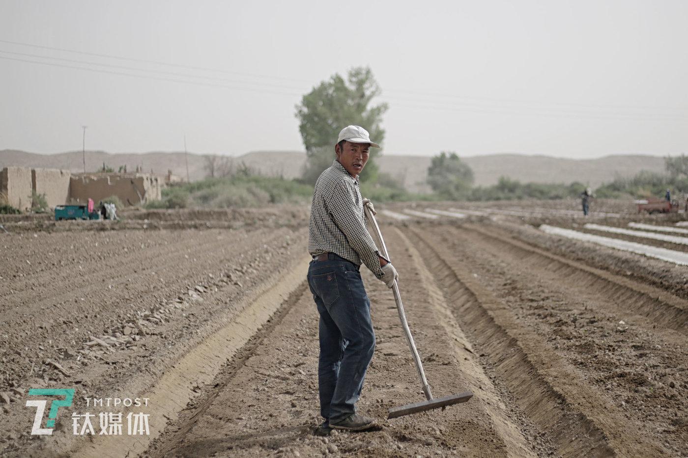 48岁瓜农薛志明今年种了40亩蜜瓜。他每年3月开始平地,5月中下旬播种,8月下旬收瓜卖瓜,9月闲下来直到来年3月。播种的时间是他一年中最忙最累的日子。