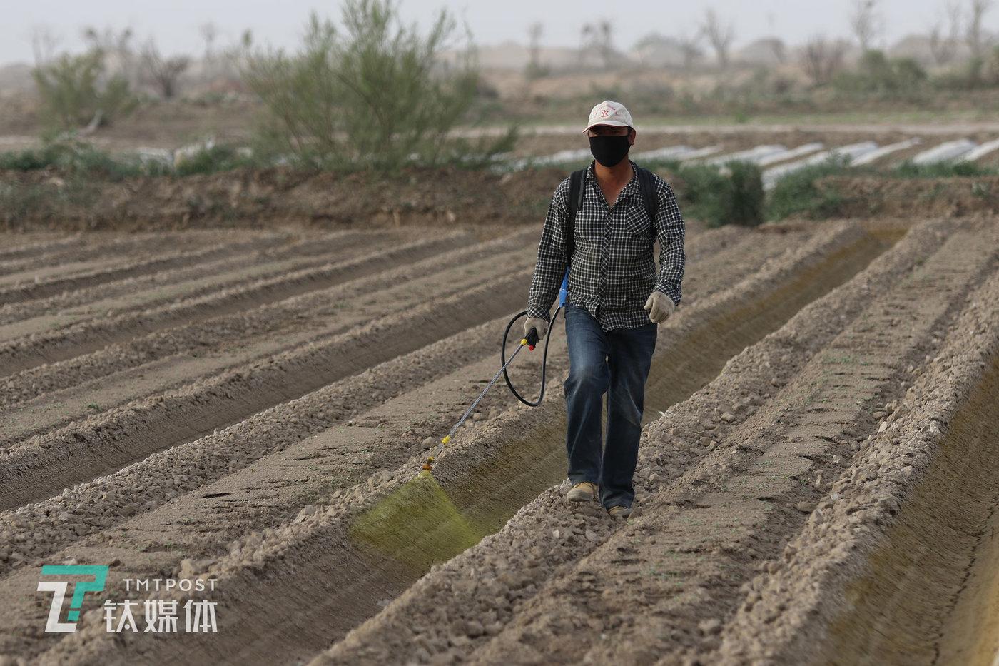 """薛志明的弟弟薛志军在瓜地喷除草剂。村庄人口流失,但土地依然是农民最重要的保障。薛志军44岁,在附近的一个镇上开了家大超市,由于""""人越来越少"""",超市生意不如以前那么好了,他今年也回村种了40多亩。"""