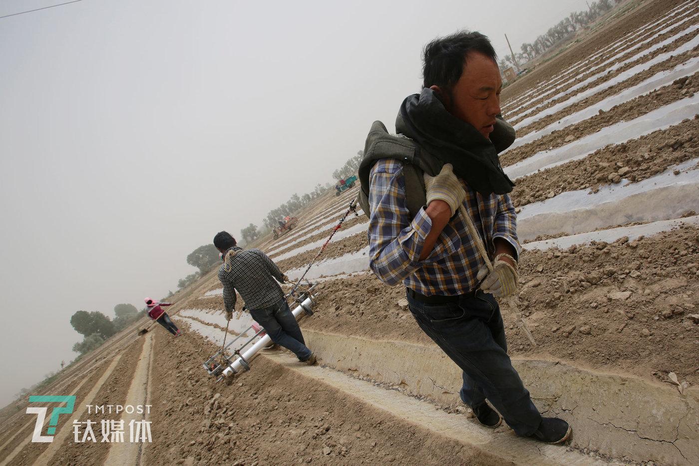 薛家两兄弟一起拉着铺膜的滚筒。他们一共种了80多亩地,干活时两家人不分彼此,按部就班一亩亩地走,一天能完成10亩工作量。