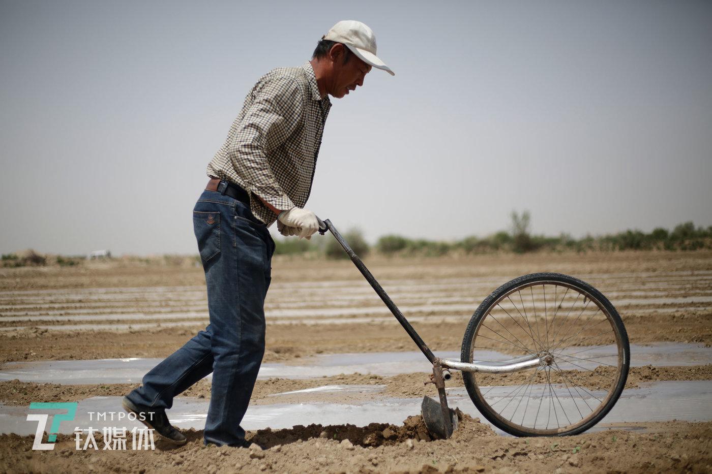 用来翻土盖膜的手推犁是由自行车部件焊接而成。