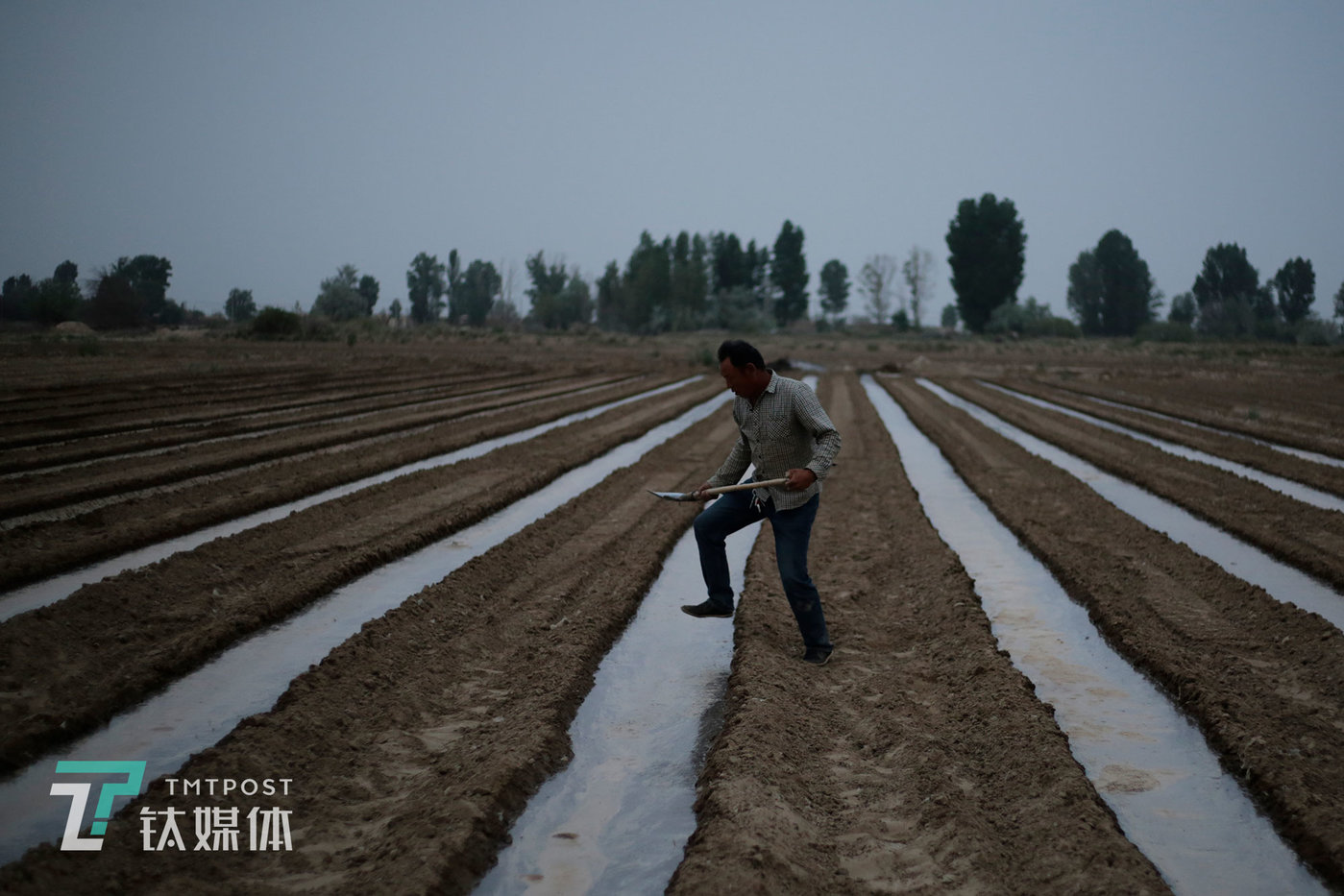 """薛志明在引完水的地里巡查,确保地沟的水在安全位置。播种前,一块地要""""喂""""两次水,这是为了使土壤涵养水分并定型。当地气候干旱、土壤偏沙质,水引进地里,只要不到两个小时就会全部渗完。"""