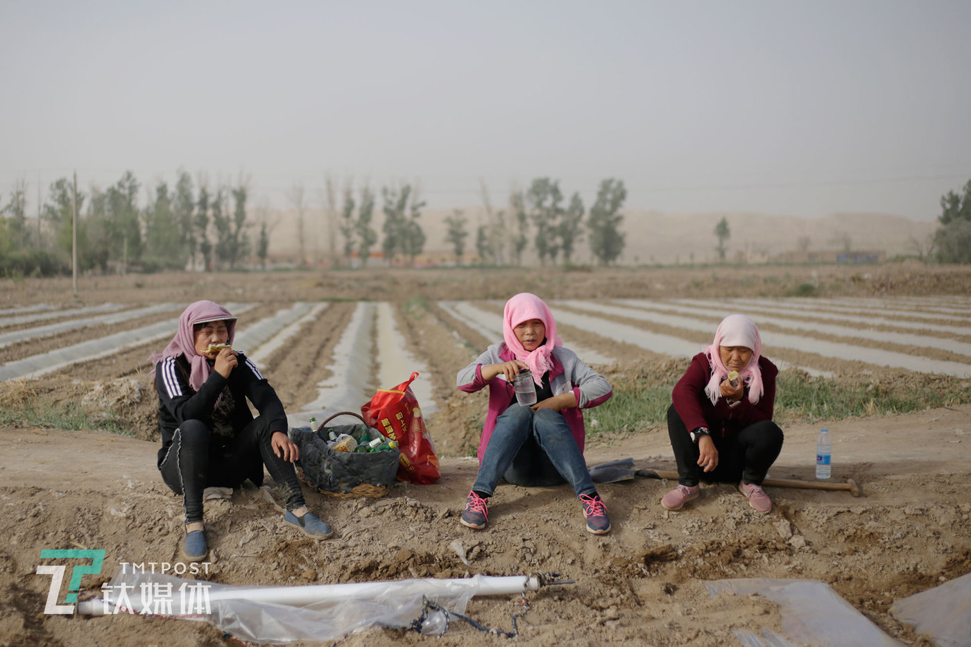 On busy days, they enlist help from nearby villagers who work as casual honeydew farmers for 150 RMB per day. At 8:30am, after two hours of hard work in the field, Xue