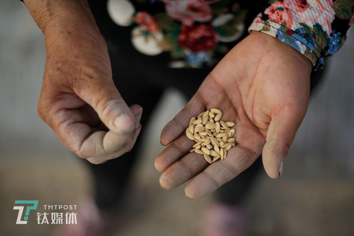 Minqin honeydew seeds