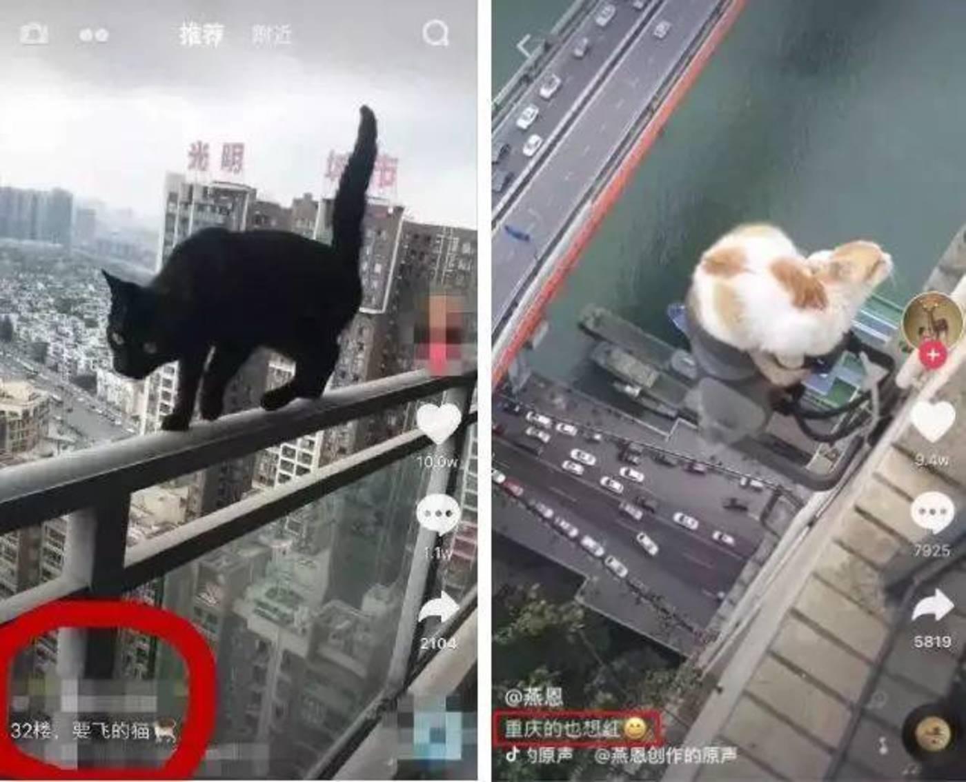 """号称""""爱猫""""的人士在32楼为猫摆拍,导致悲剧发生 ️️️"""