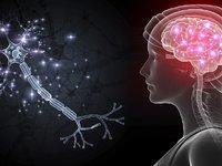"""登上本期Nature杂志的论文,首次破解线虫""""脑回路""""到底如何工作"""