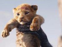 看完《狮子王》,我十分想念赵忠祥老师