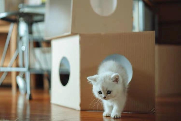"""争做宠物用品界的""""无印良品"""",猫砂盆、饮水机里的品牌机会"""