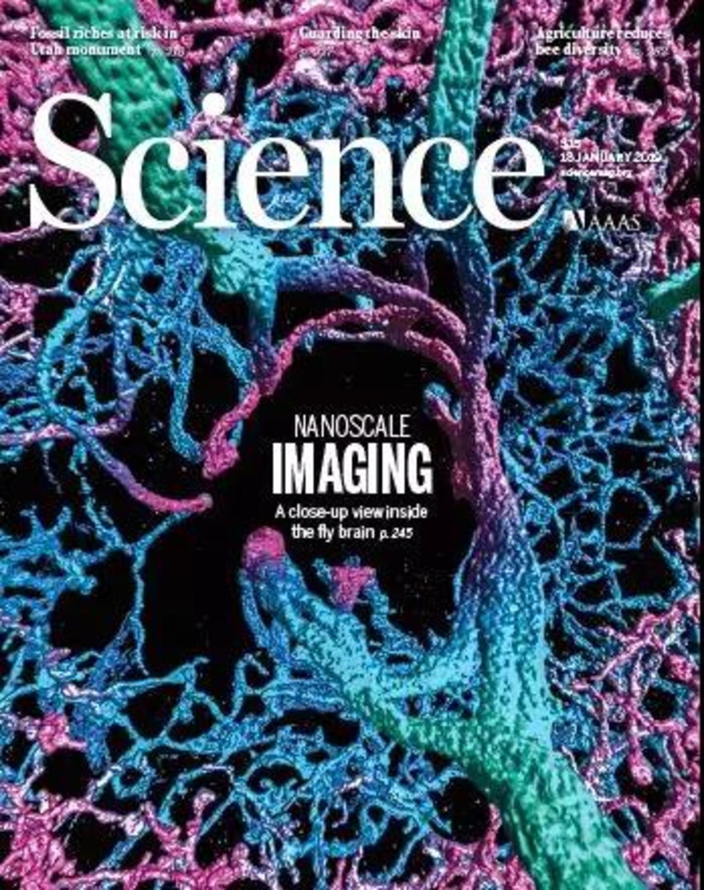 谷歌自动重建果蝇完整大脑,40万亿像素图像首度公开