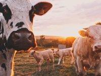 瑞士银行未来农业报告:粮食的未来和我们面临的挑战