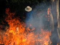 从亚马逊野火谈起:生态与经济的逻辑链如何形成闭环?