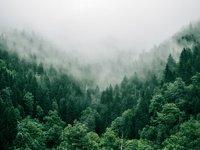 新三板挂牌林木育种和育苗企业扫描,林木种苗四大发展方向梳理