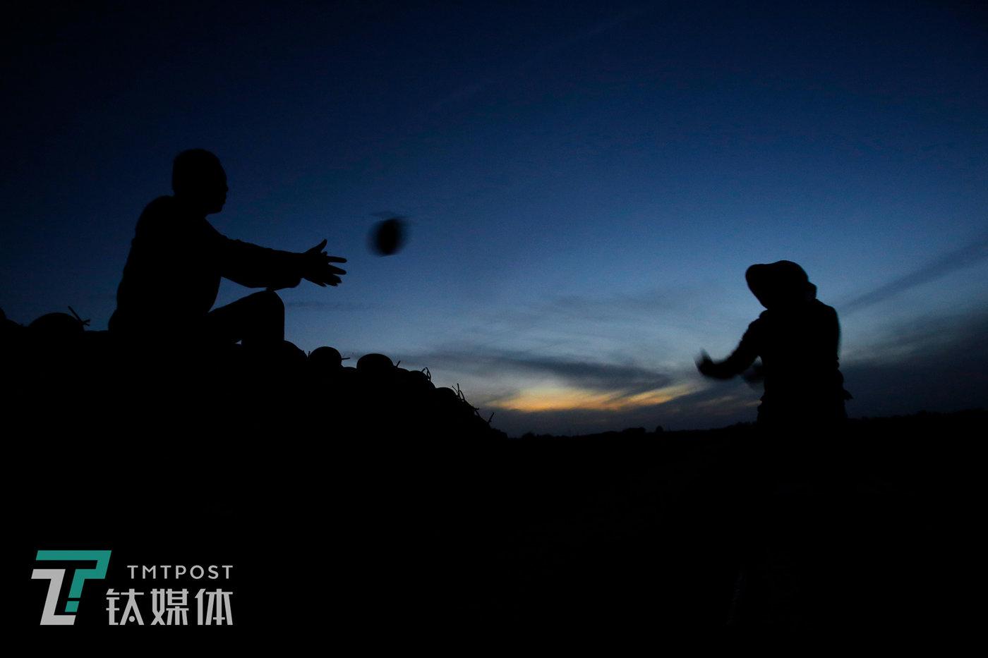 8月17日20:28,附智村,最后一缕夕阳下,薛志明夫妇俩在地里装瓜。