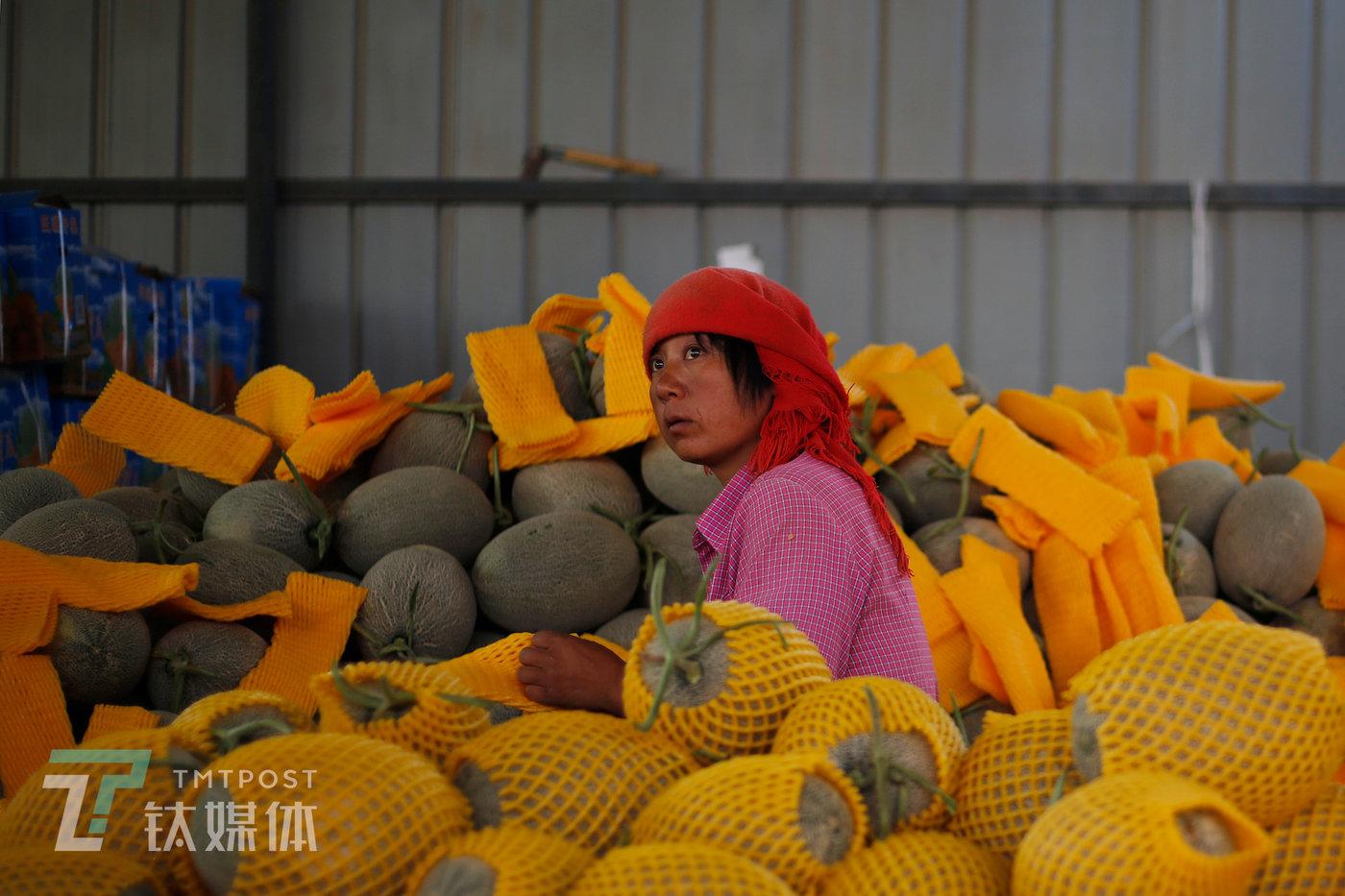 8月18日,收成镇,一位当地妇女在水果商的档口打包。她打包一箱瓜挣1.2元工钱,忙一天下来,大约200元工资。