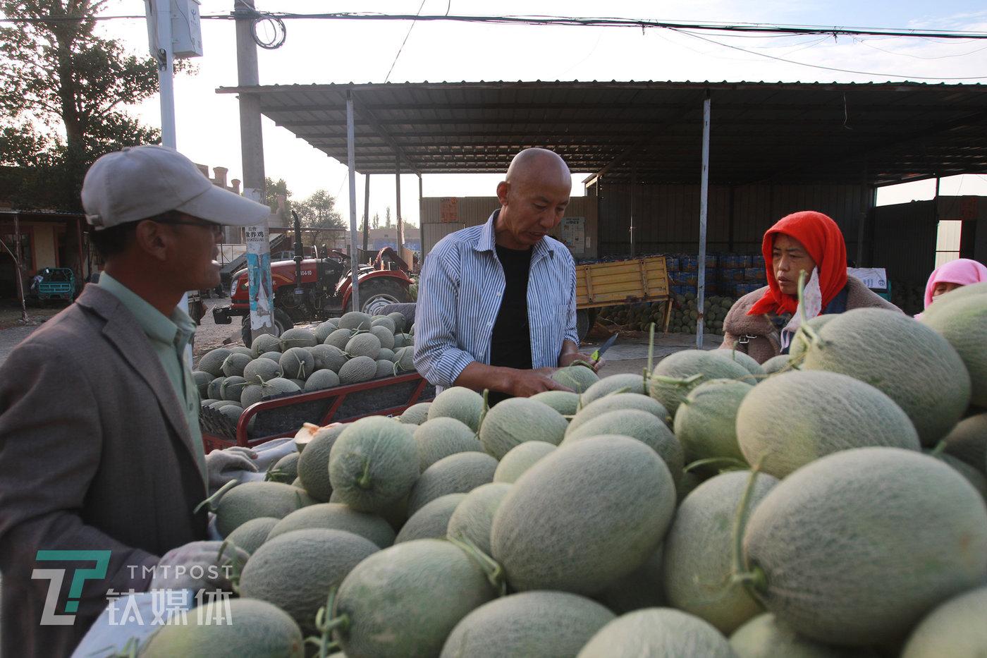 水果商尹伟(中)拦住一辆运瓜的三轮车,想要看看瓜是否合适。他来自武汉的水果商,已经连续28年到收成来收瓜。