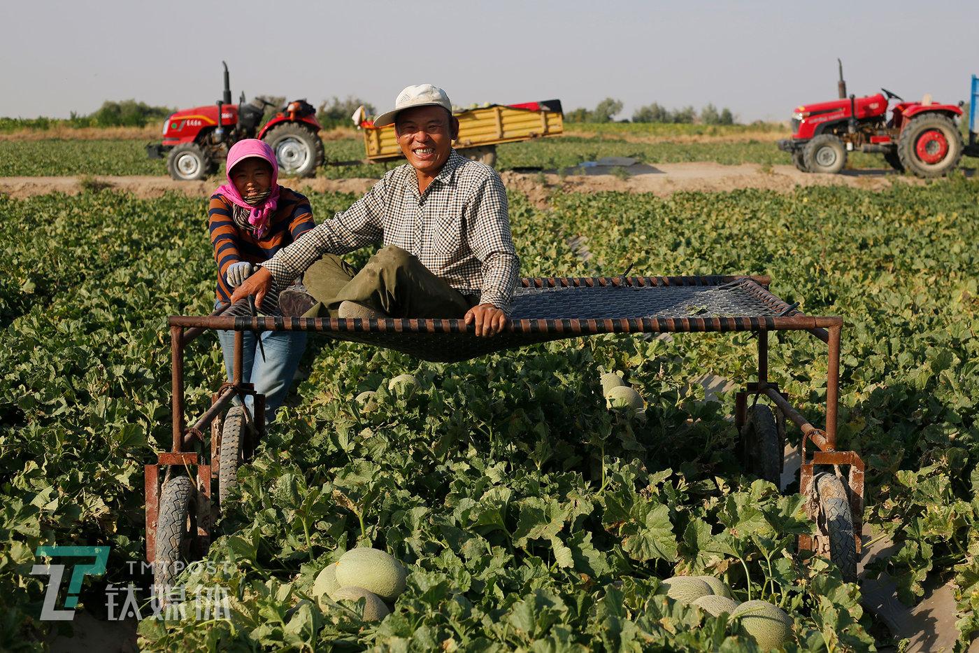 今年,薛志明的40亩地,卖了11万,比平常年份大约少两三万,比行情最好的2018年少了二十多万。