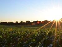 农业产值超500亿美元,加州是如何炼成的?