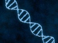 为了增强手臂肌肉,我改变了自己的一段基因