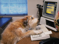 互联网社畜怎么都干不到65岁