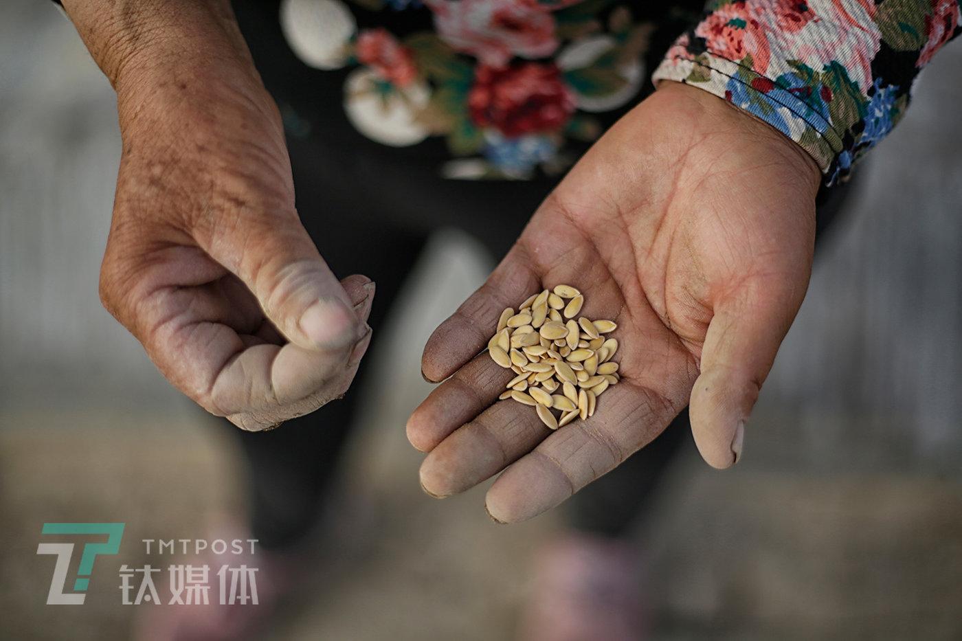 5月16日,一位瓜农手里攥着种子,准备播种。