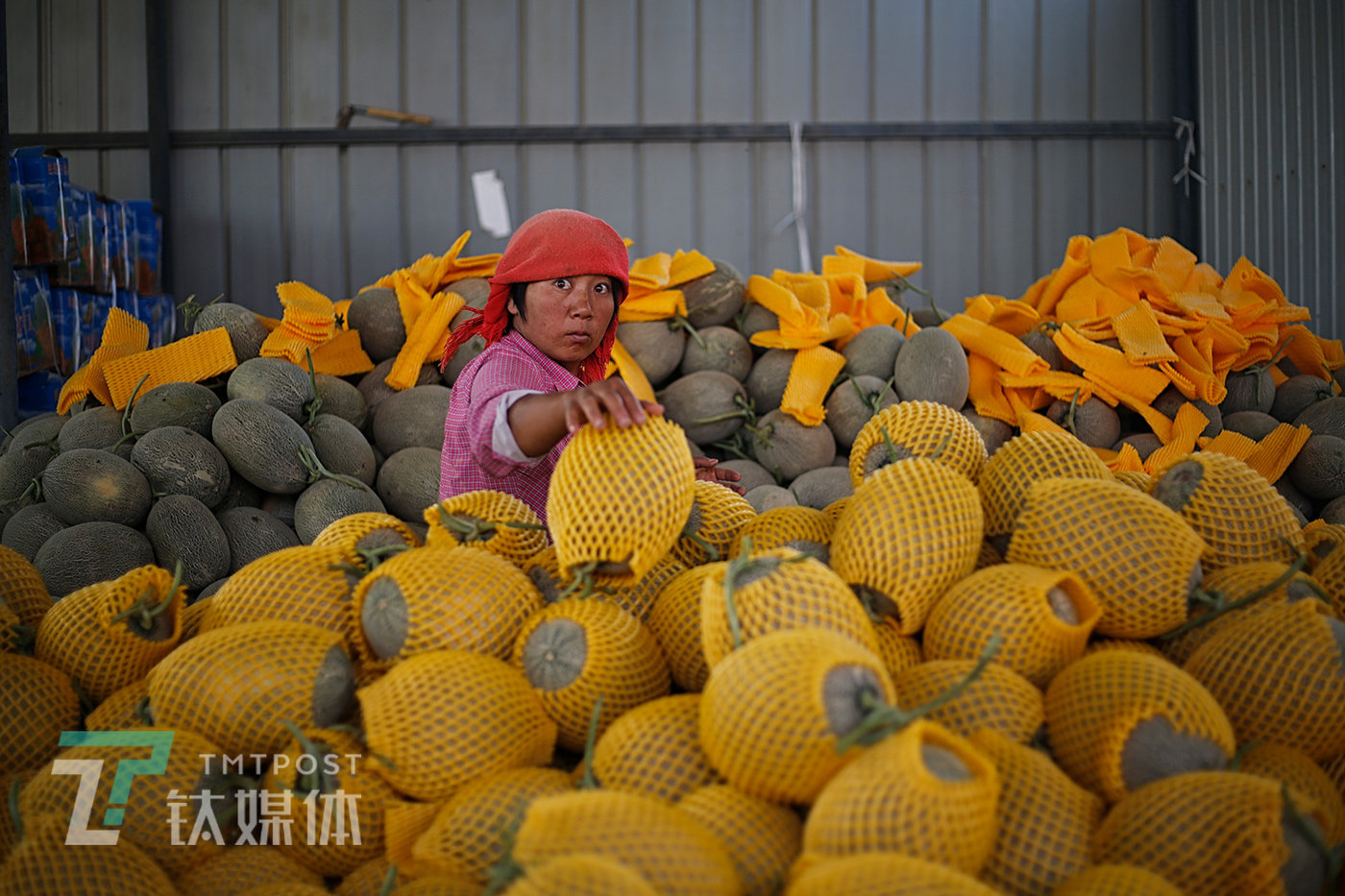 8月18日,收成镇,一位兼职打包工在打包蜜瓜。每年8月到9月,来自全国各地水果批发商会云集在这个小镇收购蜜瓜。