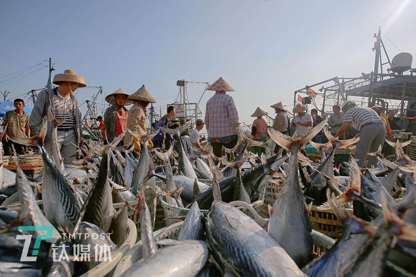 2019年9月16日,福建省漳州市东山港,渔船靠岸。