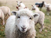 """""""闲逛赚钱"""",让宝妈、主妇爱上薅羊毛"""