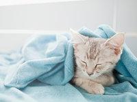 权威专家首次回应宠物能否传播新型肺炎:接触到疫情需要监控