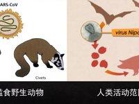 这些野生动物的病毒怎么就到了人类社会?