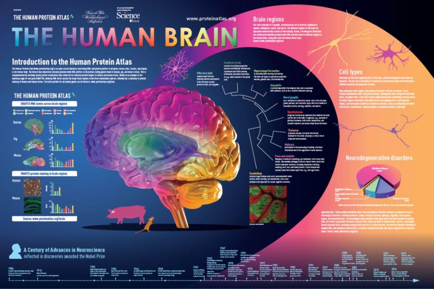 来源:人类蛋白质组官网