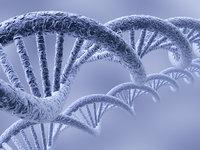 人、猪、鼠大脑蛋白质图谱问世,进攻人类科学最后的前沿