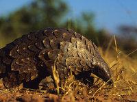 疫情之下,野生动物保护如何破局?