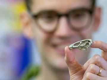 """Nature:恐龙灭绝前夕一只 """"神奇的鸡"""" 化石,揭示现代鸟类的起源"""