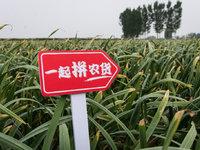 市县长直播卖农产品,拼多多推进农资下行