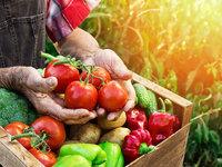 """以保鲜""""黑科技""""、冷链物流应对食物损耗,这些企业正在抢占千亿市场"""