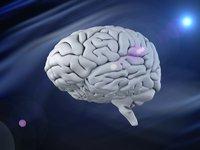 AI如何助力脑科学产业化