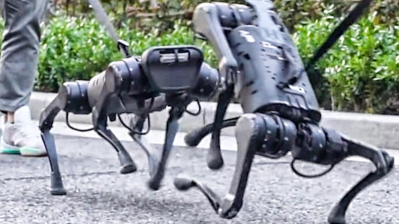 【钛媒体视频】国产机器狗,遛它!