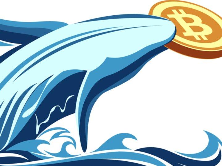 谁才是最有钱的比特币巨鲸?