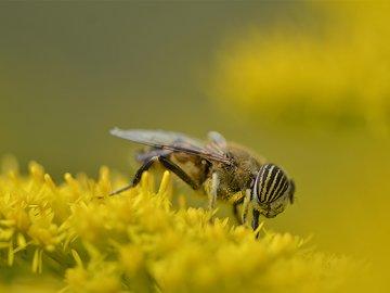 全球蜜蜂大消亡之际,无人机+泡泡机组合能完成授粉使命吗?