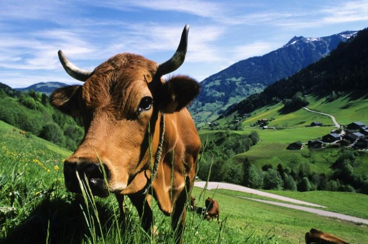 """放弃收购澳大利亚第二大乳企,蒙牛距离""""世界牛""""还有多远"""