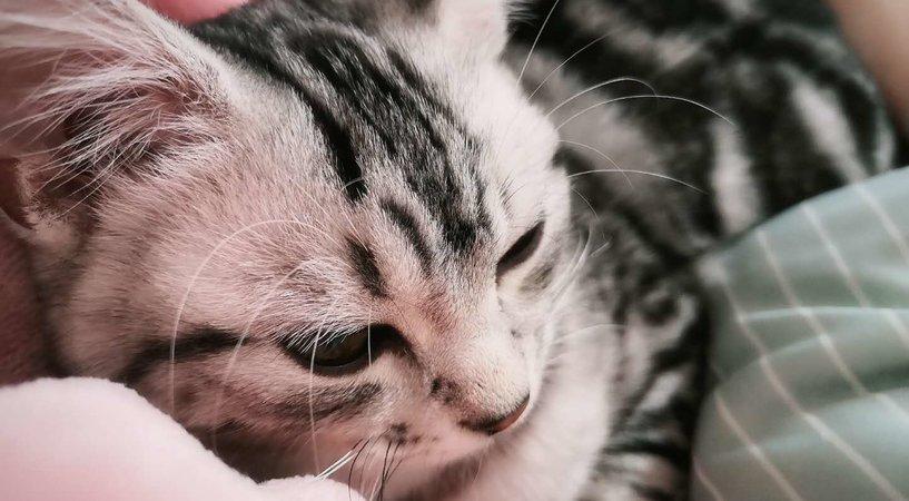 2000亿宠物经济背后,宠物医疗这门生意到底怎么样?