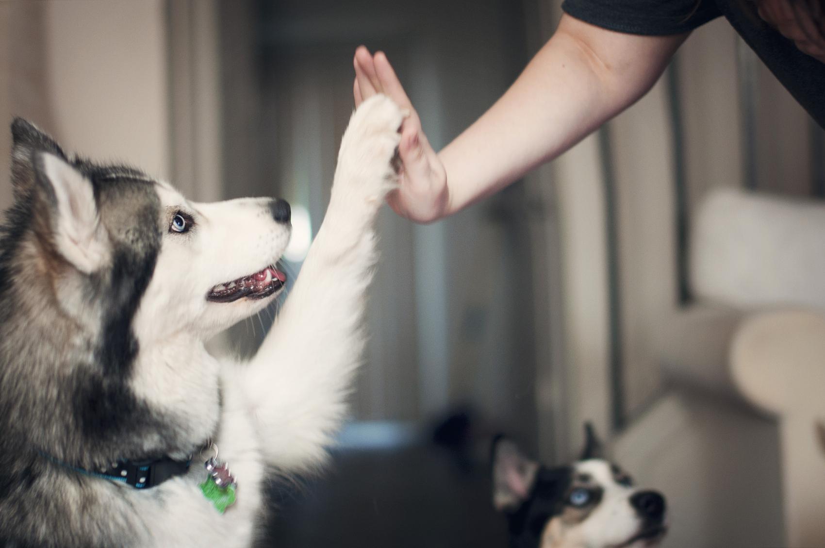 高瓴重仓近五年,腾讯、碧桂园携手入局,宠物医疗迎来拐点时刻?